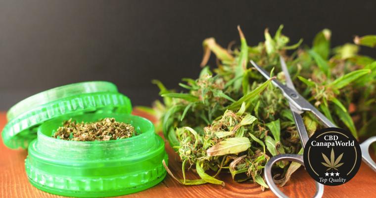 Cannabis fioritura e taglio