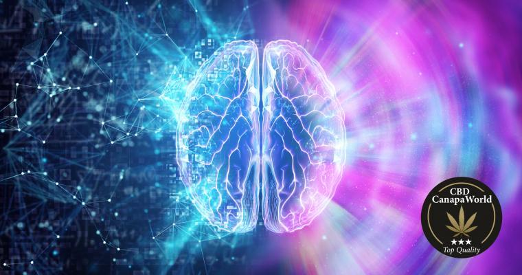 Cos'è il sistema Endocannabinoide?
