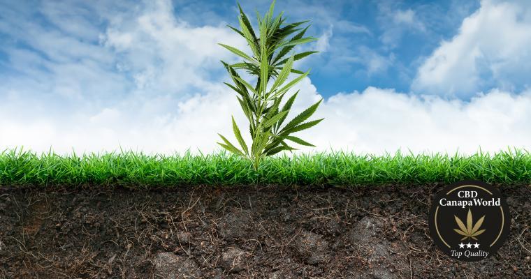 Consigli per il Neofita Parte 2: la scelta del substrato