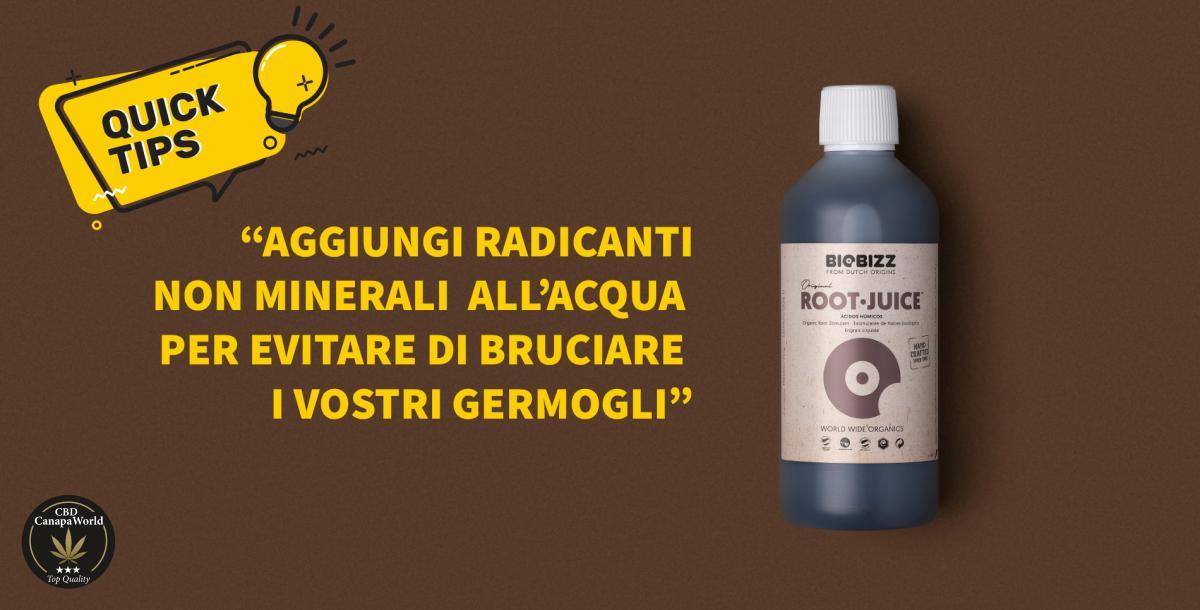 """Aggiungete del radicante non minerale, come ad esempio il """"Root Juice"""" di """"biobizz"""" all'acqua per evitare di bruciare i vostri germogli"""